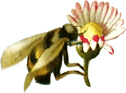 Nectar clipart Bee Graphics Bee gathering Bees