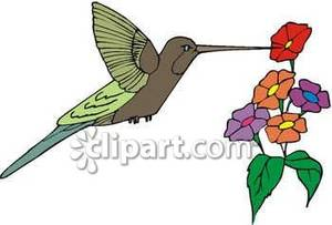 Nectar clipart Hummingbird Flowers Drinking Royalty Flowers