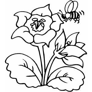 Nectar clipart coloring Flower Flower Printable Coloring Book