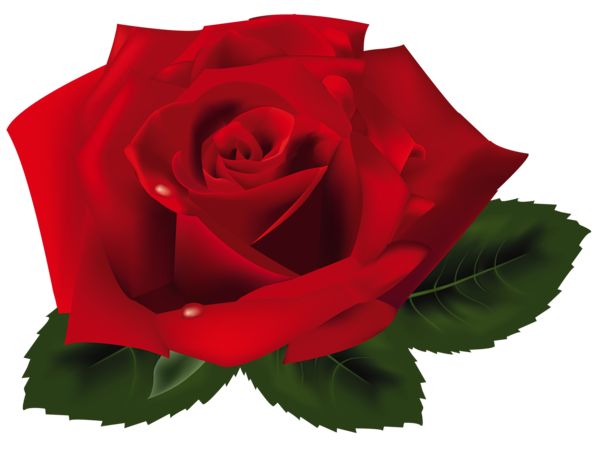 Nectar clipart red rose  Red Pinterest PNG Rose