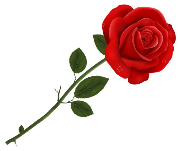 Nectar clipart red rose Pinterest best 460 PNG images