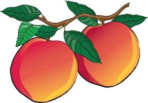 Nectarine clipart Art Images Peach Free Clipart