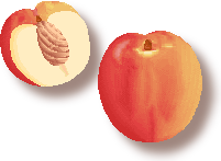 Sugar Apple clipart Art Clipart Clip Art Download