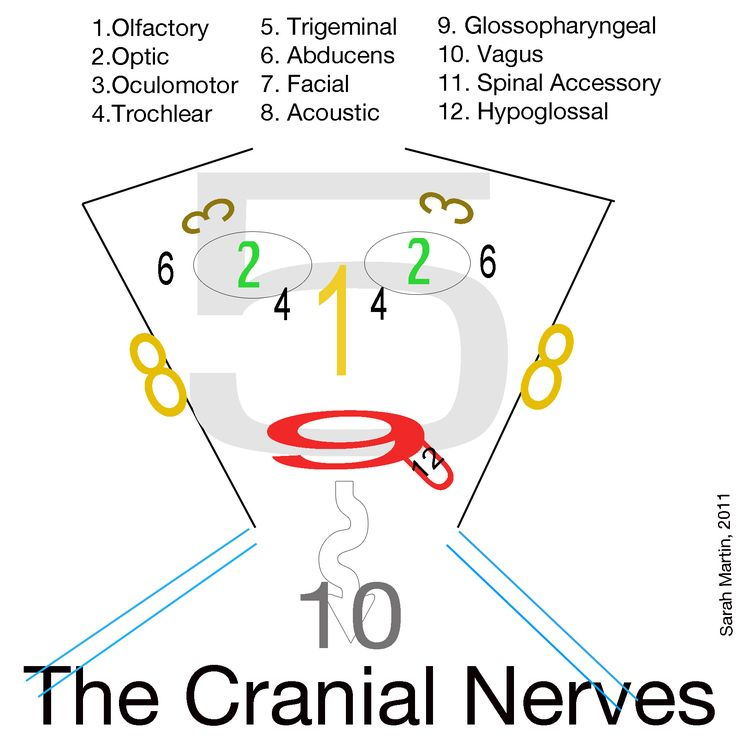 Nerves clipart nervous face BRUXISM ideas WITH GRINDING TMJ