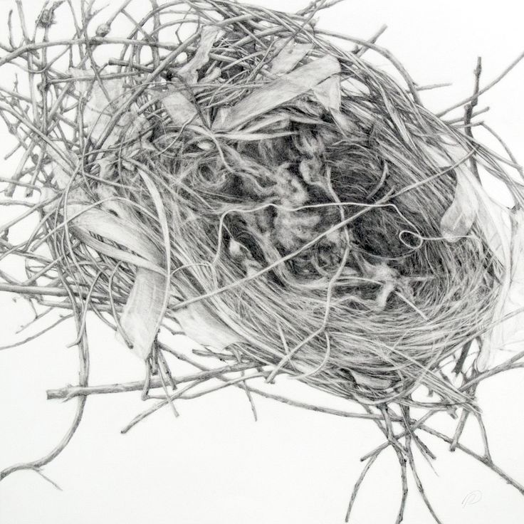 Nest clipart pencil sketching #11