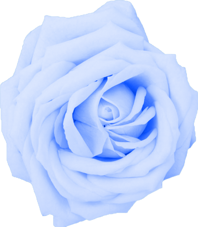 Netherlands clipart blue rose This to baby blue to