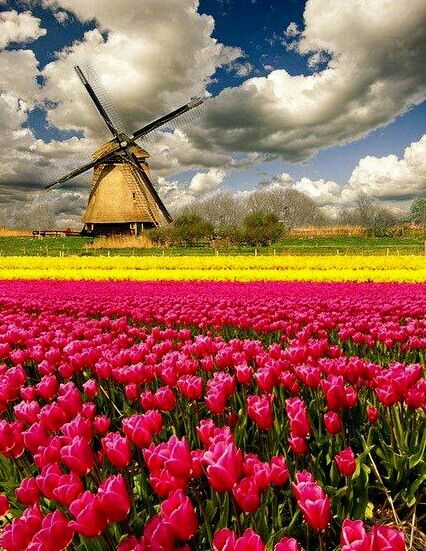 Netherlands clipart spring tulip Holland air amsterdam side! Especially