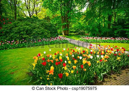 Netherlands clipart tulip garden Of and csp19075975 in tulip