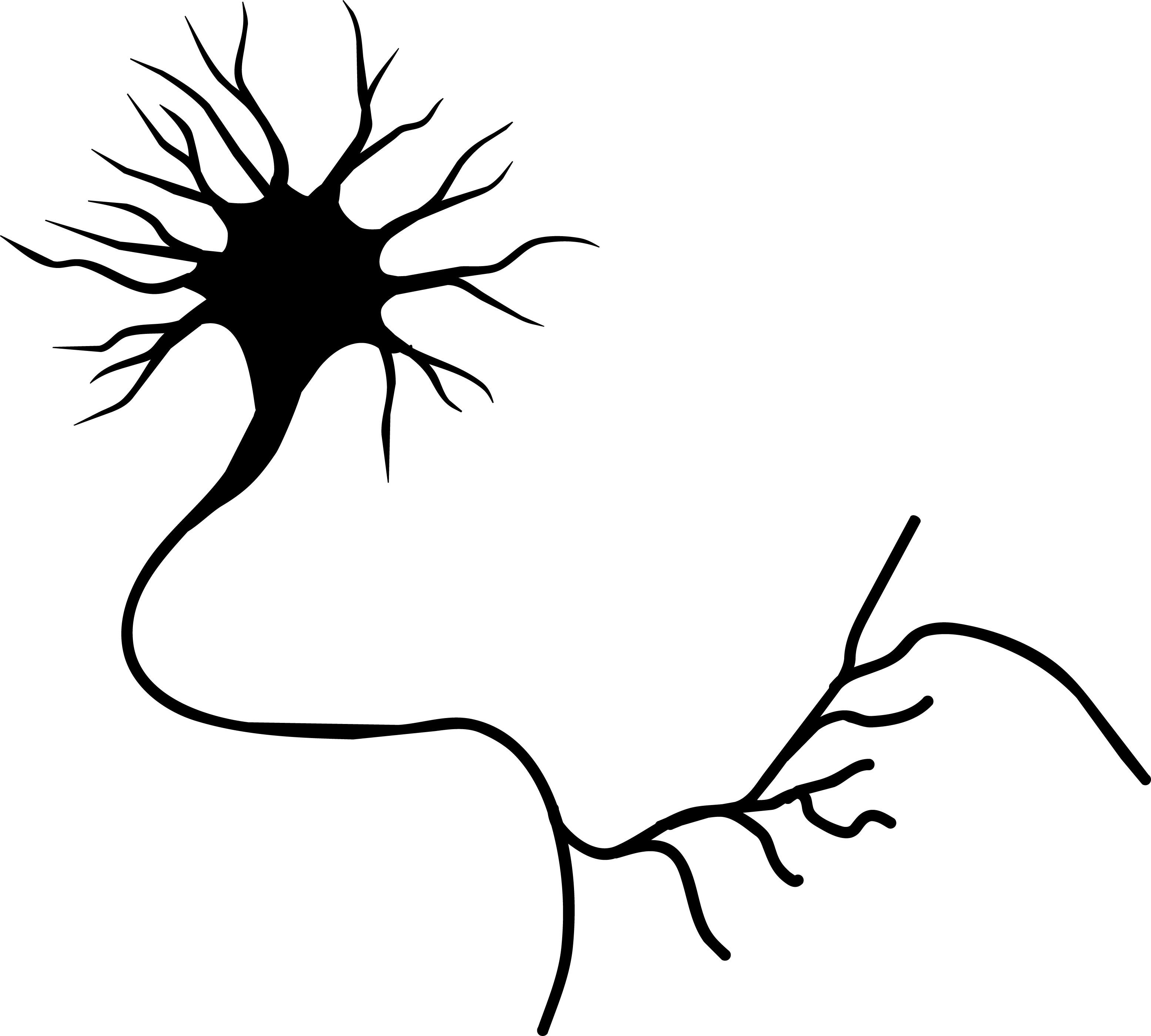 Neuron clipart unipolar 20clipart neuron%20clipart Panda Clipart Images