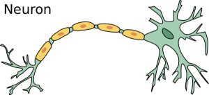 Neuron clipart atoms and molecule Neuron Large Clip Download Neuron