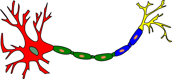 Neuron clipart Com as: vector this Clip