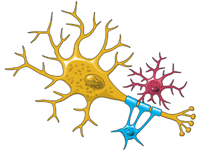 Dying clipart life and death Life Brain Basics: Neuron and