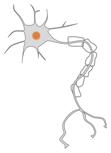 Neuron clipart atoms and molecule Clipart  Available clipart formats