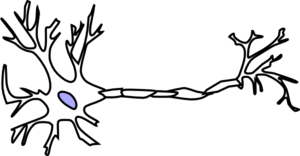 Neuron clipart bipolar Wt Neuron art Myelin Without