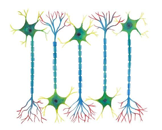 Mussel clipart neuron #2