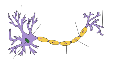 Neuron clipart labeled Of of an branching At