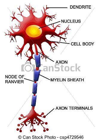 Neuron clipart motor neuron Art Neuron of Vector Structure