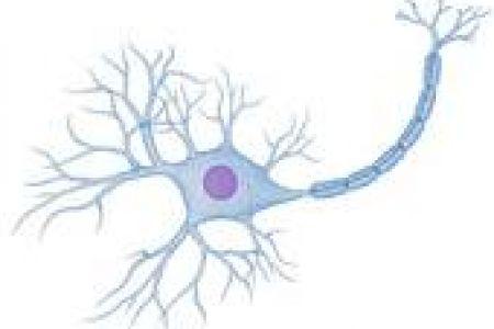 Neuron clipart nerve cell Royalty Cells Nerve art clip
