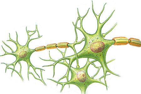 Neuron clipart nerve cell Clip UK DA Download Clipart