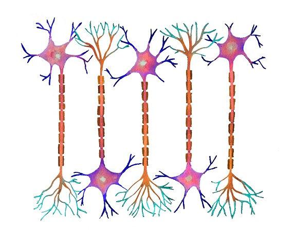 Neuron clipart neurology Neurons science art  neurology