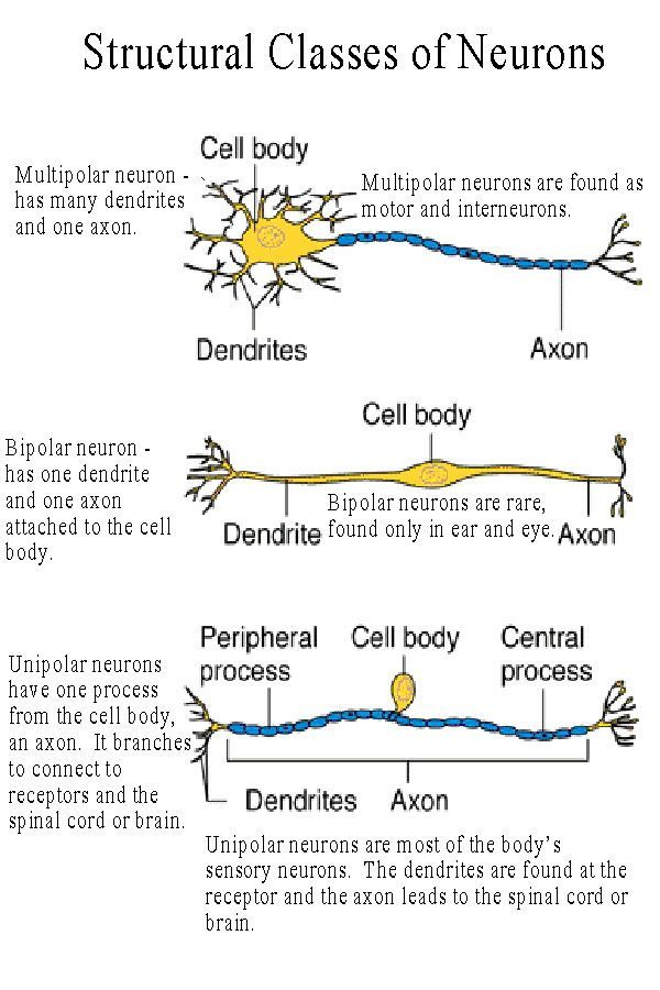 Neuron clipart neurology And of images on about