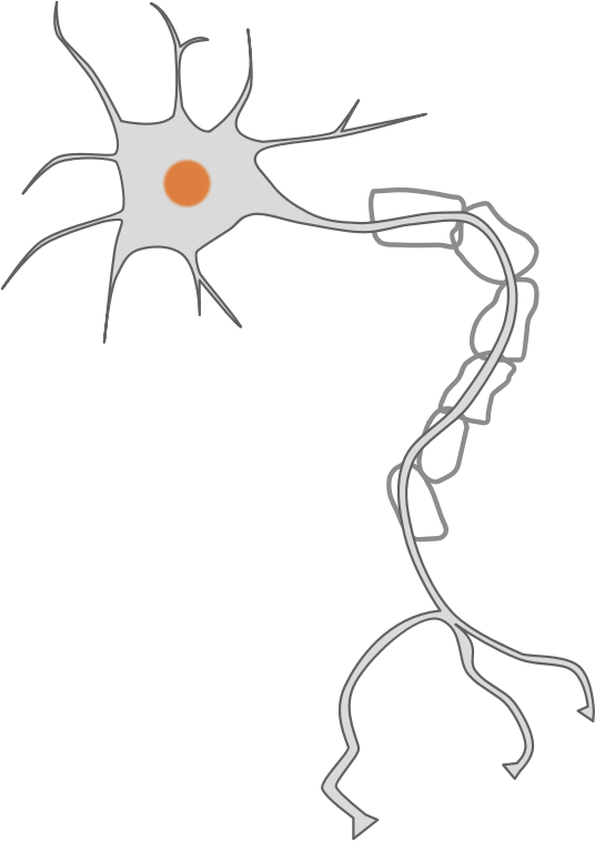 Neuron clipart part Free Neuron to Art Public