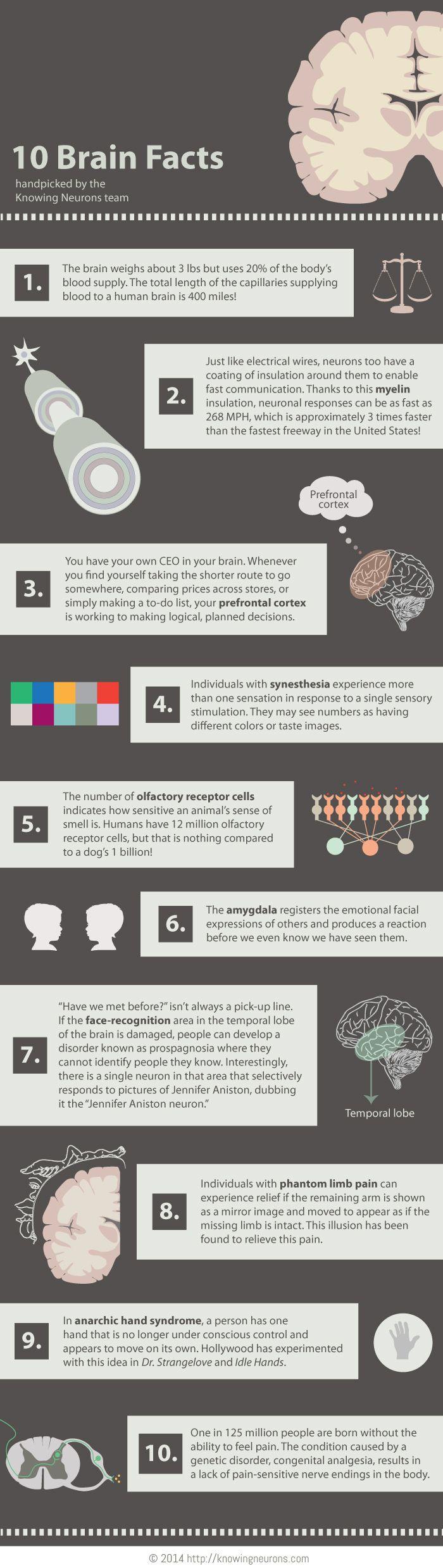 Neuron clipart psychology brain Ideas Facts on Best Brain