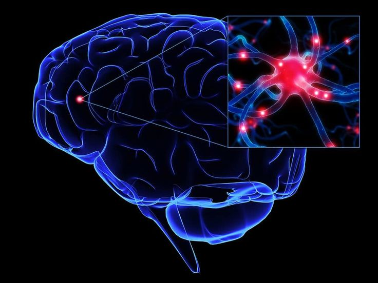Neuron clipart psychology brain 20+ on Best neurons Pinterest