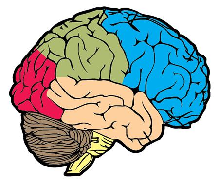 Drawn brains unlabelled 6 CyberSurgeons