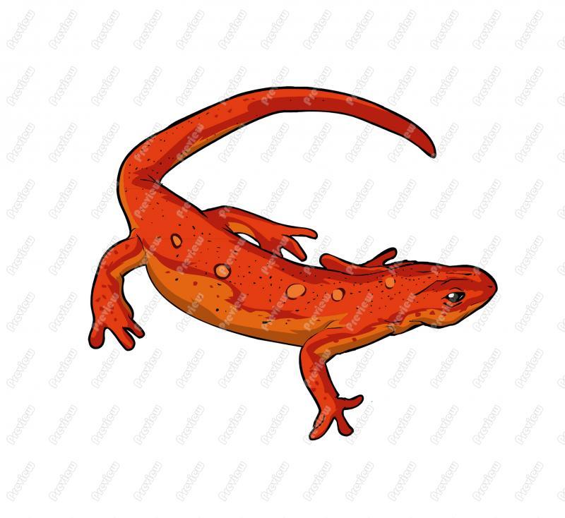 Newt clipart Cartoon Art Newt Cartoon Clip