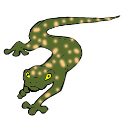 Newt clipart Their special squirt and info