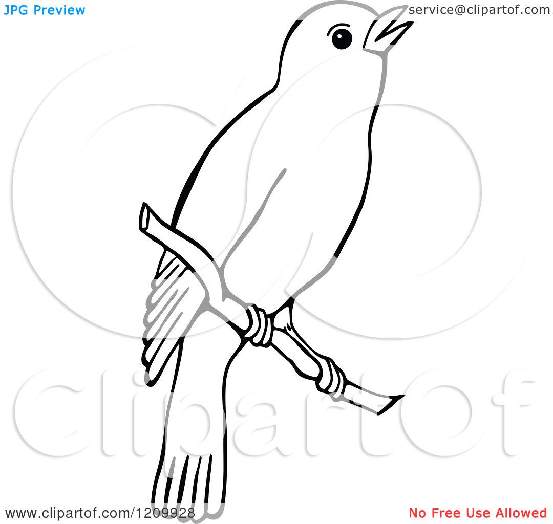 Brds clipart nightingale Nightingale Top Nightingale 96 Clip