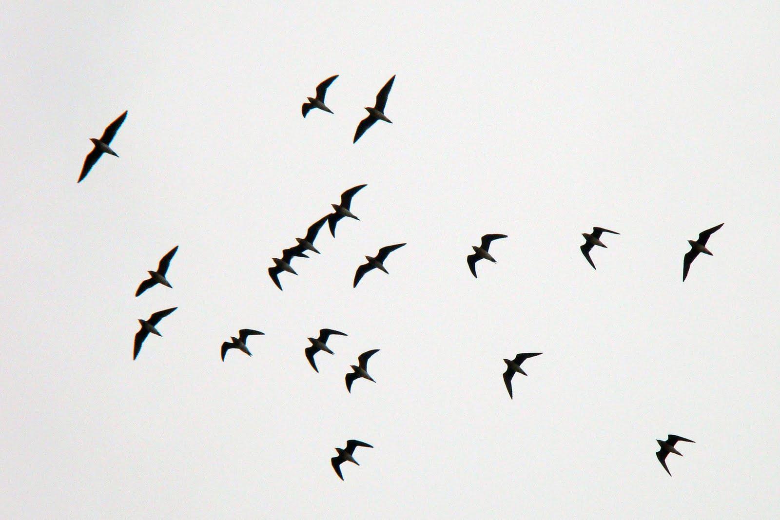 Flying nest… Nightingale We are