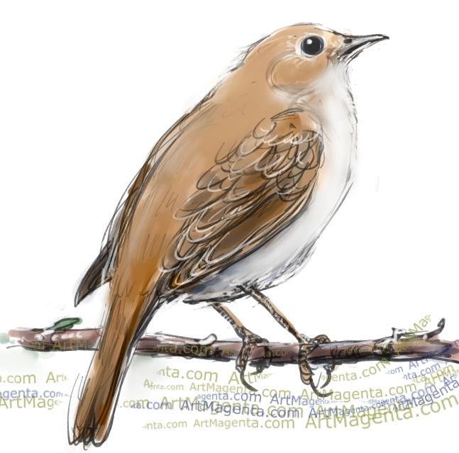 Nightingale clipart maya bird  Day: Bird Nightingale Nightingale