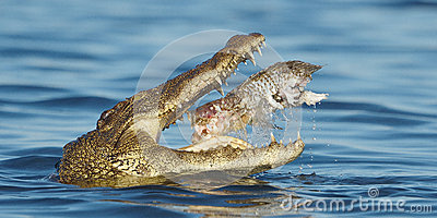 Nile River clipart africa Clipart (28+) nile fish eating