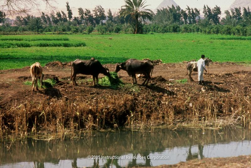 Nile River clipart valley the king Egypt jpg Agriculture Delta In