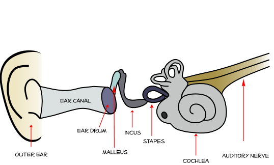 Noise clipart ear sound The drum causes turn in