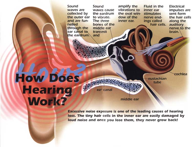 Noise clipart eardrum Should Ringing Worried and Your