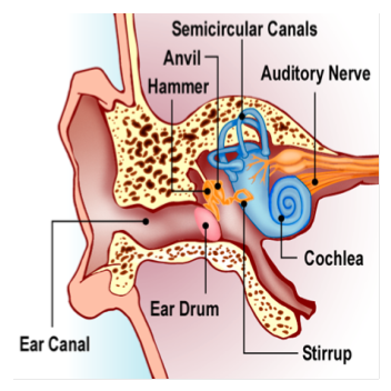 Noise clipart eardrum Oval Human your that the