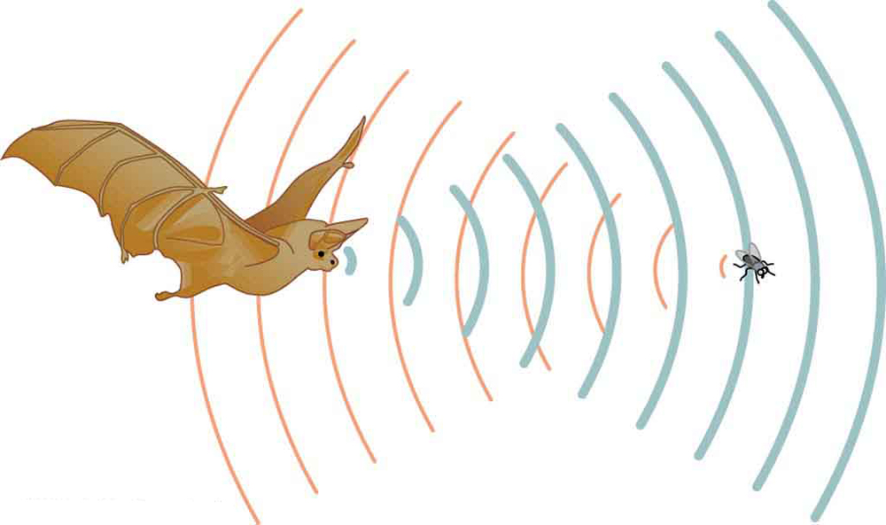 Noise clipart sound energy Wavelength sound to The a