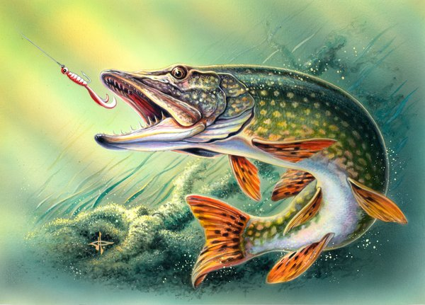 Northern Pike clipart  northern paintings paintings Pinterest