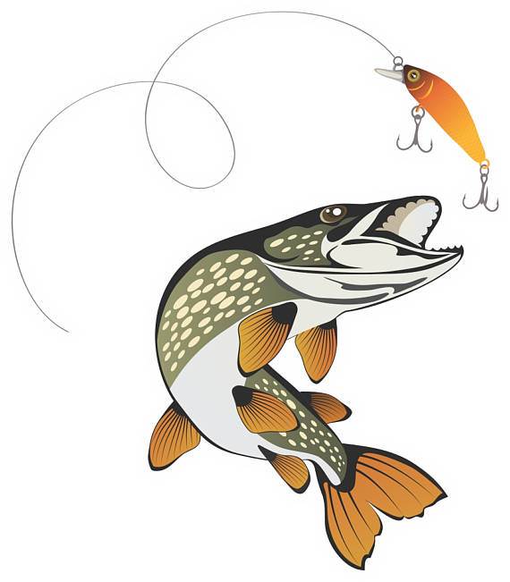 Northern Pike clipart great northern #4