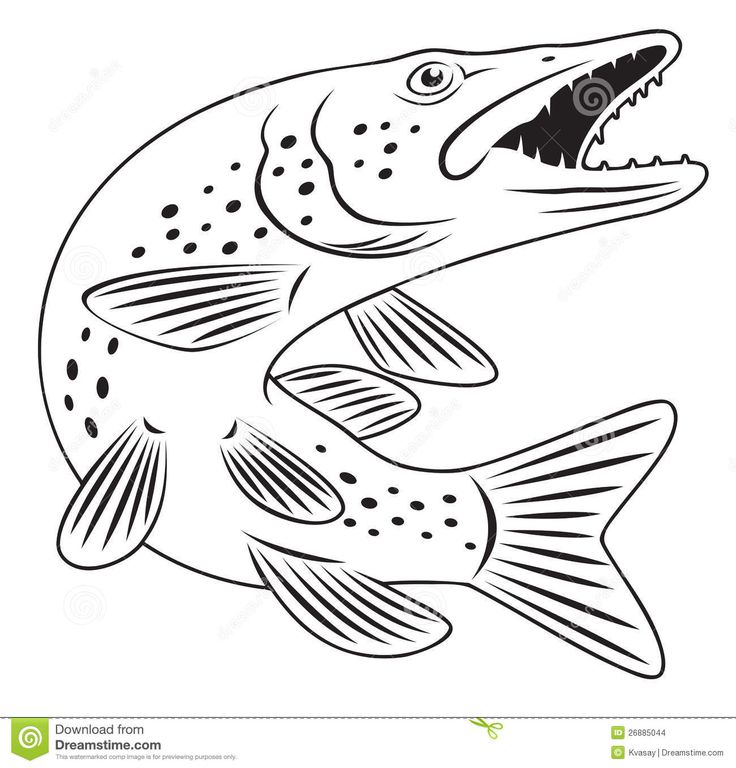 Northern Pike clipart great northern #7
