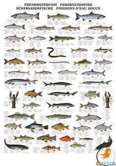 Northern Pike clipart norther #9