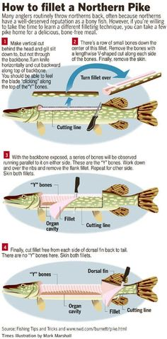 Northern Pike clipart norther #13