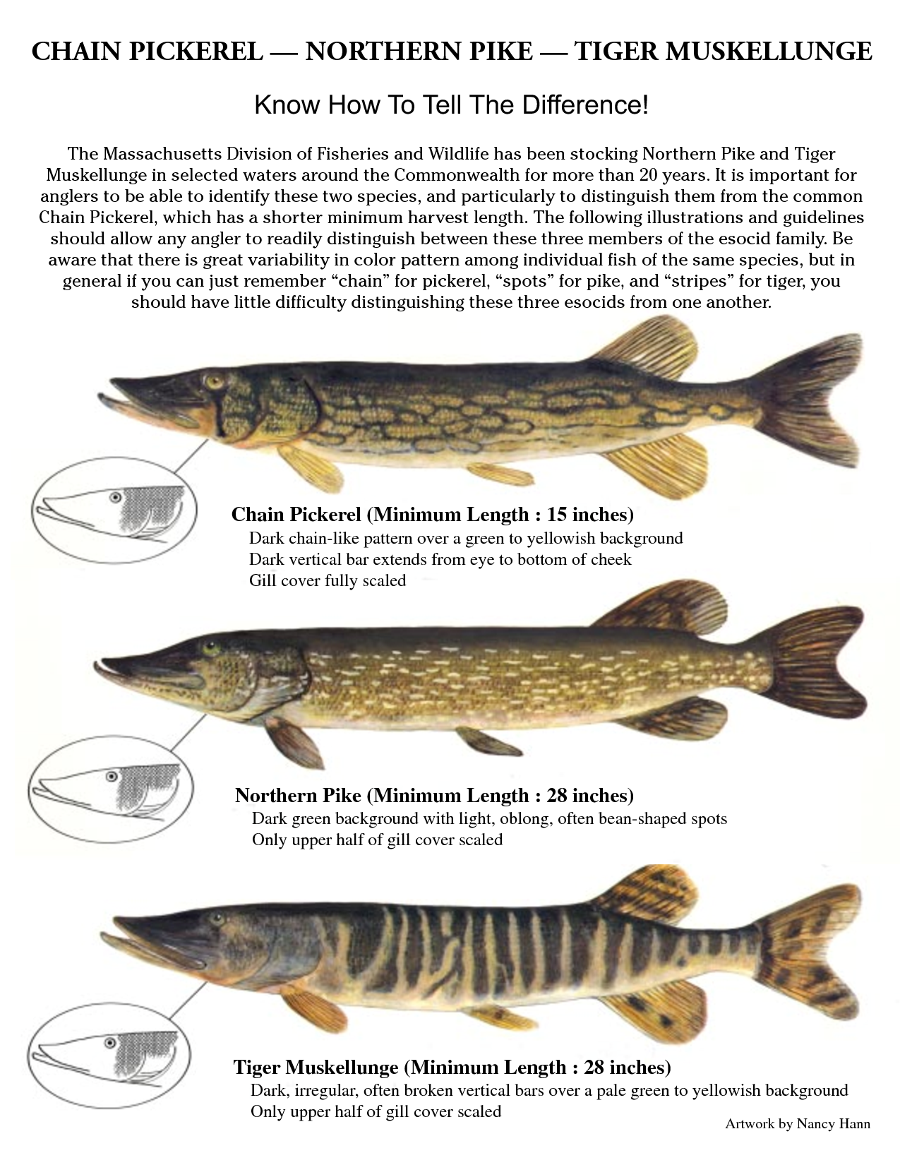 Northern Pike clipart norther #3