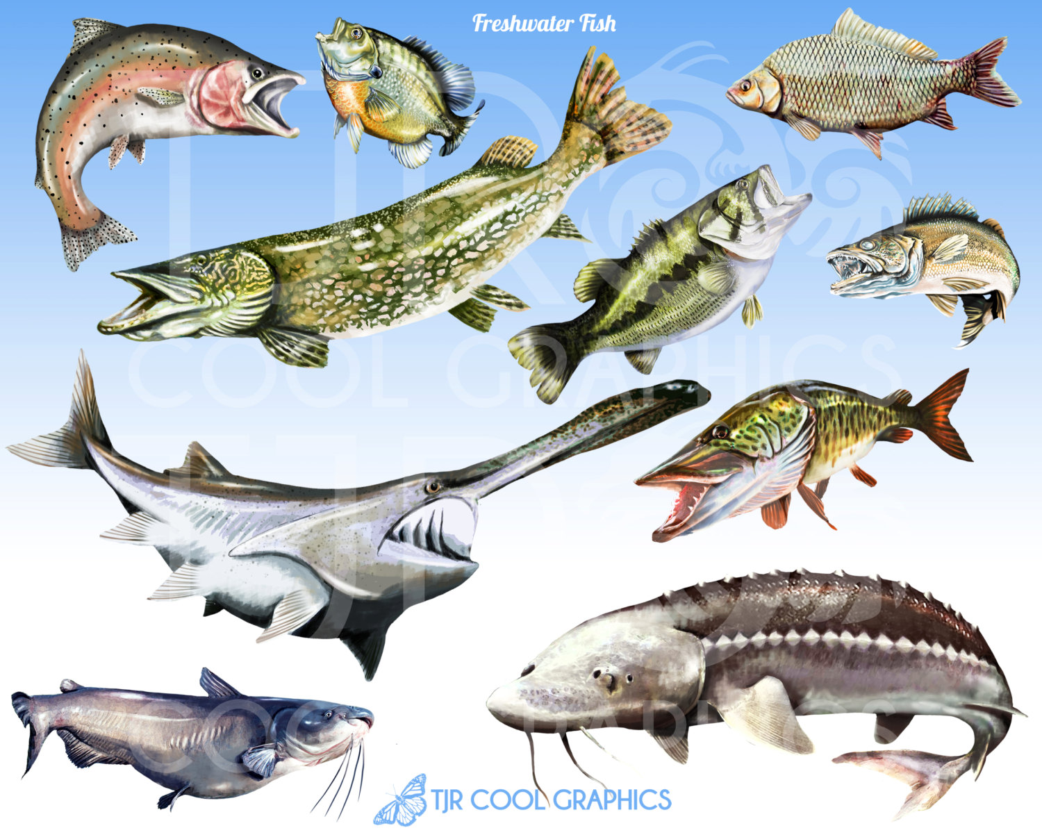 Trout clipart walleye #9