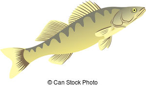Northern Pike clipart perch #15