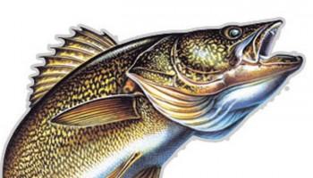 Northern Pike clipart perch Association Fishing Resorts Walleye River