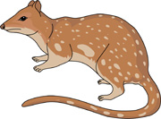Numbat clipart Quail Clipart Cat for 75 Kb marsupial